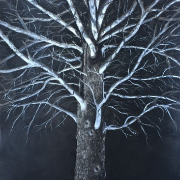 Tree At Night, Charcoal on Paper, 18 x 24, $550